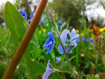 wildflowers Fotografie Stock Libere da Diritti