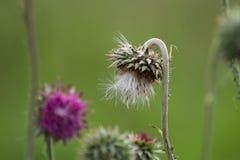 Wildflowers Στοκ Φωτογραφίες