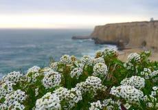 wildflowers imagenes de archivo