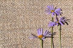 wildflowers photos libres de droits