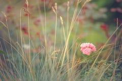 wildflowers Obraz Royalty Free
