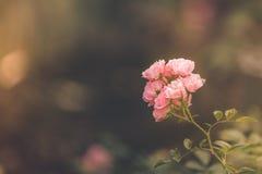 wildflowers Fotografia Royalty Free