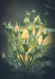 wildflowers Zdjęcie Stock
