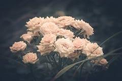 Wildflowers Стоковая Фотография RF