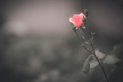 Wildflowers Стоковое Фото