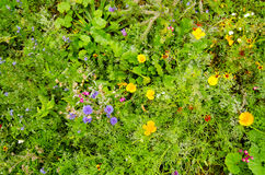 Wildflowers from above. View from above of a selection of summer wild flowers blossoming in England Stock Images