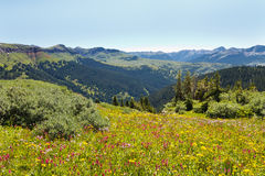 Wildflowers in Abundance on Alpine Meadow Royalty Free Stock Image