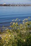 Wildflowers accanto alla spiaggia con il pilastro bianco della roccia vago nel fondo Fotografia Stock Libera da Diritti