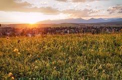 Wildflowers al tramonto Fotografia Stock