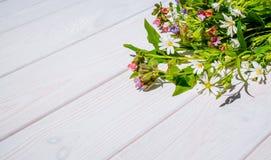 Wildflowers allegri della molla Fotografie Stock