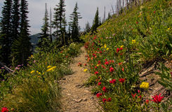 Wildflowers Along The Trail Royalty Free Stock Photography