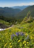 Wildflowers alpestres Images stock