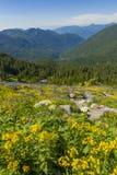 Wildflowers alpestres Foto de archivo libre de regalías