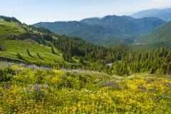 Wildflowers alpestres Imagen de archivo libre de regalías