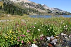 Wildflowers alpestres au lac ring photo libre de droits