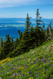 Wildflowers On Alpine Ridge Stock Photography