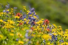 Wildflowers alpini Fotografie Stock Libere da Diritti