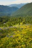 Wildflowers alpini Immagini Stock