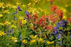 Wildflowers alpinos imagens de stock royalty free