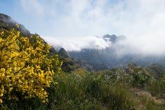 Wildflowers amarelos em um montanhês rochoso com névoa imagens de stock royalty free