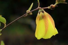 Wildflowers amarillos. Foto de archivo libre de regalías