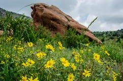 Wildflowers amarillos en parque rojo de las rocas Fotografía de archivo libre de regalías