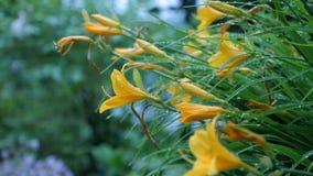 Wildflowers amarillos en un fondo verde Imágenes de archivo libres de regalías