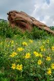 Wildflowers amarillos en vertical roja del parque de las rocas Fotos de archivo