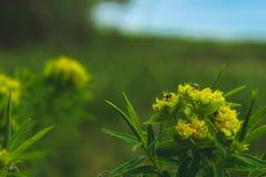 Wildflowers amarillos La primavera ha venido imagen de archivo libre de regalías