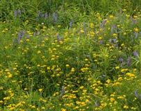 Wildflowers amarillos y azules Foto de archivo libre de regalías