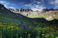 Wildflowers at American Basin in the Colorado Rockies. Summer wildflowers high up in the Colorado Rocky Mountains near Lake City, Co.  American Basin is off Stock Images