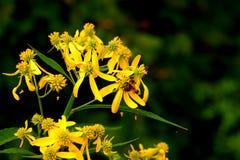 Wildflowers assez jaunes dans le jardin photos stock