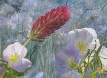 Wildflowers astratti Fotografia Stock