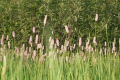Wildflowers au coucher du soleil Photo libre de droits