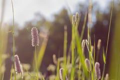 Wildflowers au fond de coucher du soleil Photos stock
