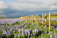 Wildflowers au Wyoming Photos stock