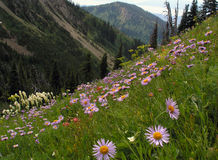 Wildflowers auf Bergabhang Stockfotografie