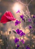 Wildflowers auf dem Gebiet Stockfotos