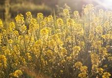 Wildflowers auf dem Gebiet mit Sonnenlicht Stockbild