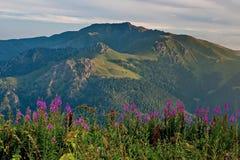 Wildflowers auf dem Hintergrund des Berges Blumen-Tal Die Beschaffenheit von Sibirien stockbild
