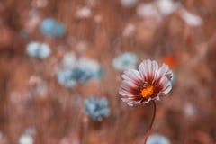 Wildflowers auf einer Wiese an einem sonnigen Tag Stockbild