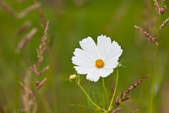 Wildflowers auf einer Wiese an einem sonnigen Tag Lizenzfreies Stockbild