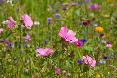Wildflowers auf einer Wiese an einem sonnigen Tag Stockfotos