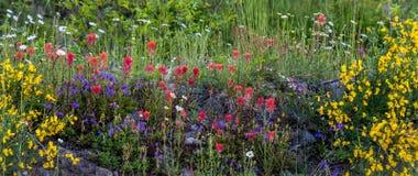 Wildflowers auf Mt-Haube Stockfotografie