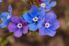 Wildflowers azules y púrpuras Fotografía de archivo libre de regalías