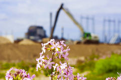 Wildflowers. And in the backgound a construction site Royalty Free Stock Image