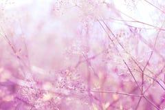Wildflowers background Stock Photos