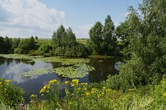 Wildflowers on the Bank of the Lake. Lake in Nizhegorodsky region stock images