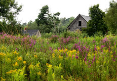 Wildflowers and Barn. In Maine stock photos