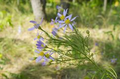 Wildflowers bask στον ήλιο στοκ εικόνες